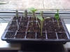courgetts, cucumbers and toms