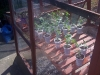 Repaired Greenhouse