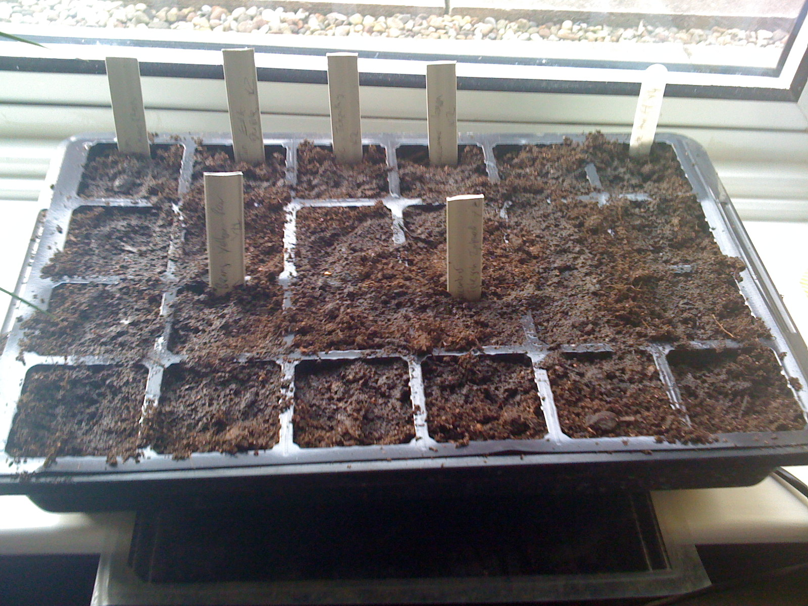 second tray planted and labelled