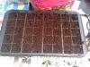 seed tray ready