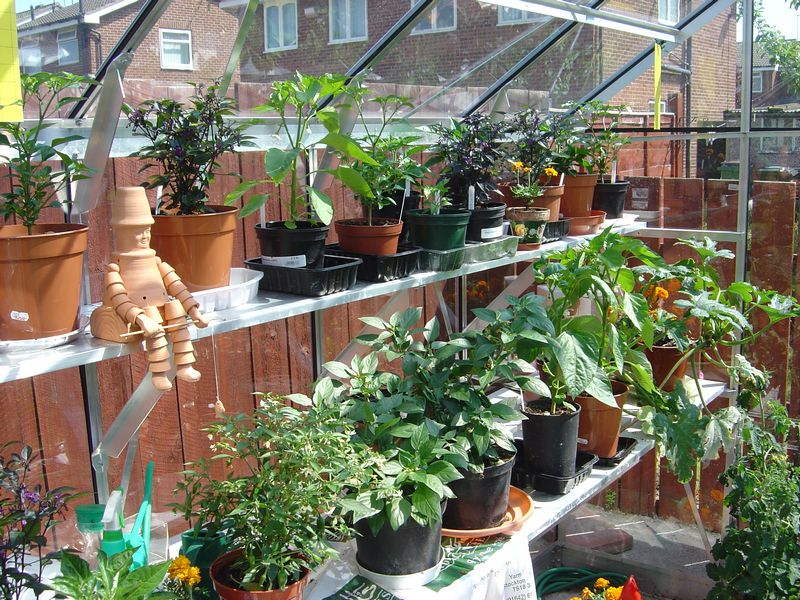 the greenhouse early in the season