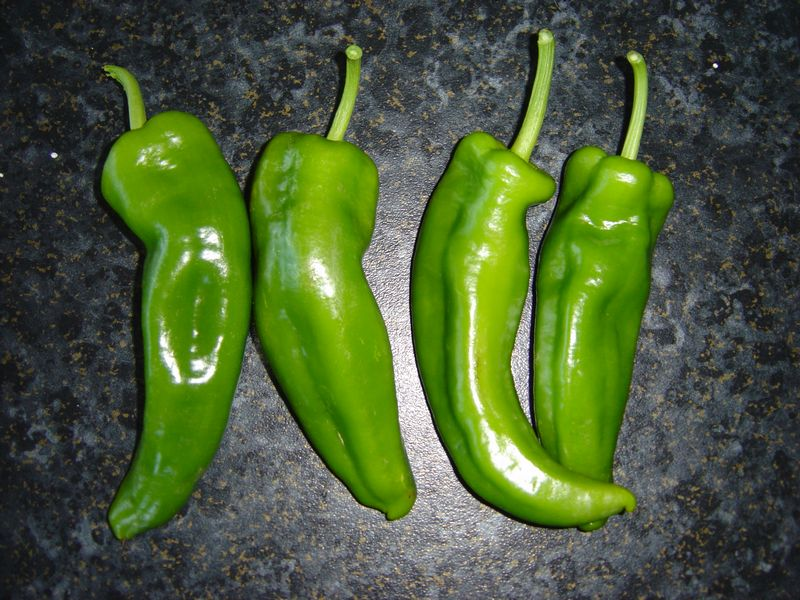 Mild green chilli, great for stuffing