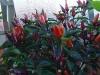 Fantastic colour foliage