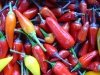 a mixture of small colourful chillis