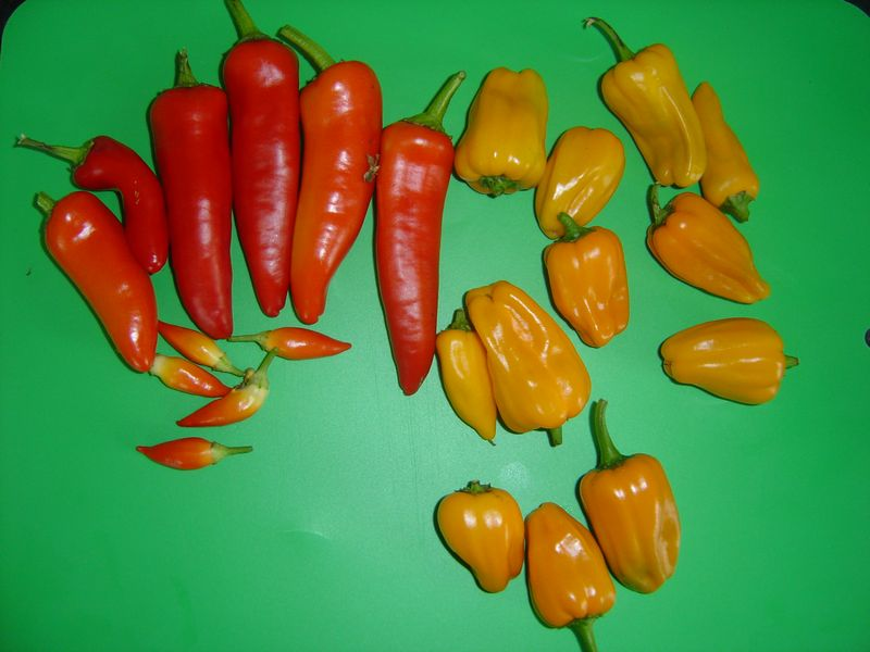 a small but firey harvest