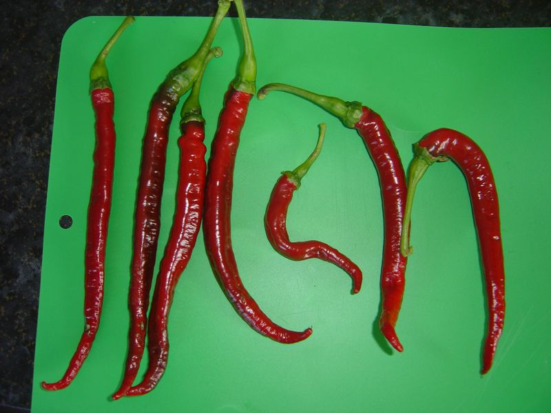 whippets tail chillis
