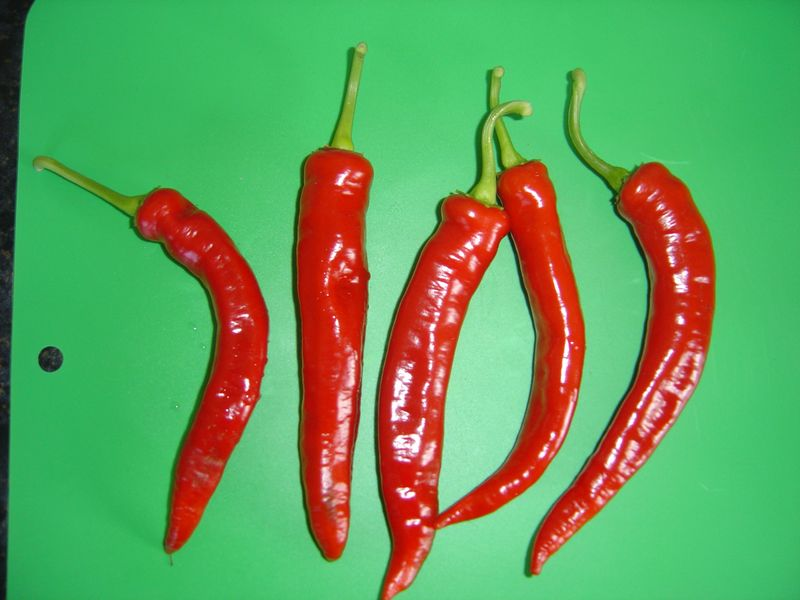 hot portugal chillis - one of my fave\'s