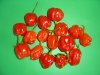 caribbean red hot chili - a type of habenero apparently