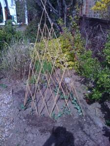 peas round the teepee