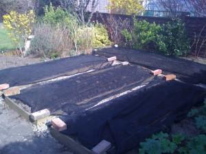 veg beds netted